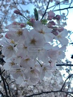 春の写真・画像素材[411207]
