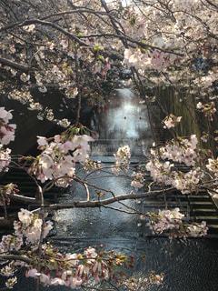 春の写真・画像素材[412065]