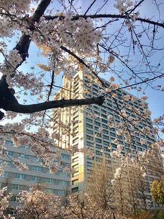 春の写真・画像素材[412865]