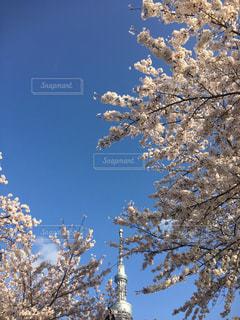 春 - No.419314