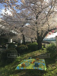 春の写真・画像素材[419317]