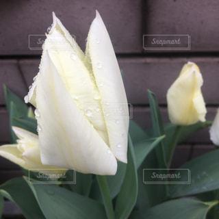 春の写真・画像素材[421174]