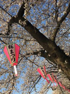春の写真・画像素材[421175]