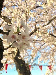春の写真・画像素材[424711]