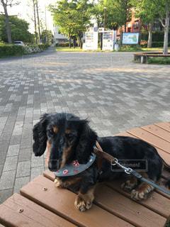 犬の写真・画像素材[445920]