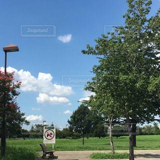空の写真・画像素材[467904]