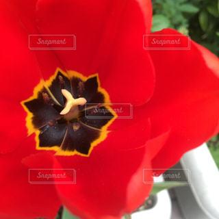 花の写真・画像素材[533981]