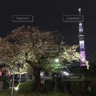 東京の写真・画像素材[568979]