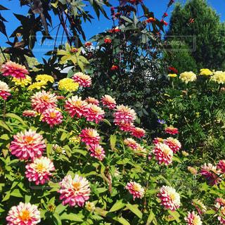 近くのフラワー ガーデンの写真・画像素材[775701]