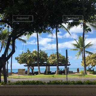 椰子の木から見える空の写真・画像素材[1120111]