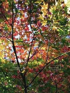 近くの木のアップの写真・画像素材[1649037]