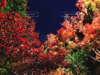 花の前に木の写真・画像素材[1649043]