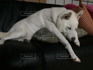 犬の写真・画像素材[473686]