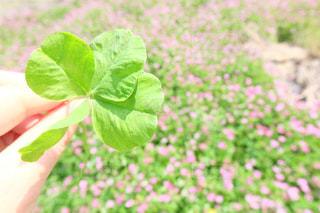 緑の写真・画像素材[456797]