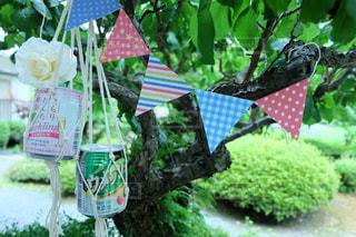緑,フラッグ,梅の木,スパークリング,梅酒の日,ポットハンガー