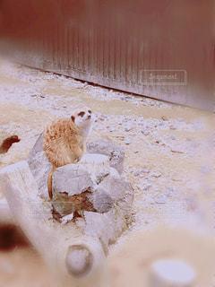 近くに動物のアップの写真・画像素材[726181]