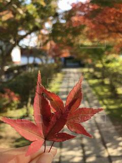 植物にピンクの花の写真・画像素材[858089]