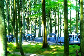 公園の木の写真・画像素材[1443629]