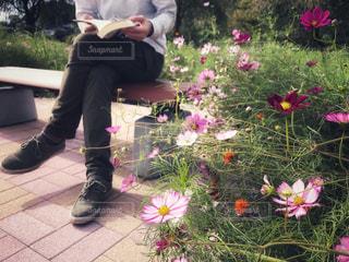 自然,秋,花畑,ピンク,コスモス,ベンチ,本,読書の秋,下松スポーツ公園