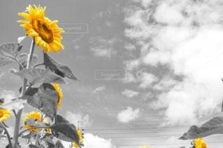 花のクローズアップの写真・画像素材[3501225]