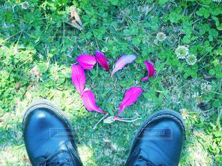 花,靴,ピンク,足元,花びら,ハート