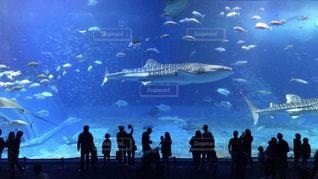 海,青,水族館,沖縄,休日,美ら海水族館,お出かけ,ジンベエザメ,レジャー施設