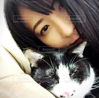 猫 - No.594264