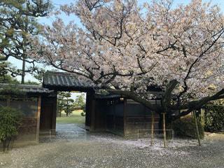 花,春,桜,庭園,旅行,門,日本,広島,しまなみ海道,尾道,西山別館