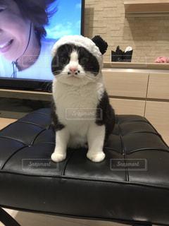コスプレ猫ごましおの写真・画像素材[1257798]
