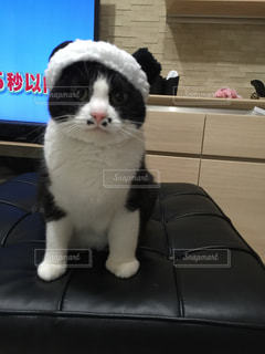 コスプレ猫ごましおの写真・画像素材[1257812]