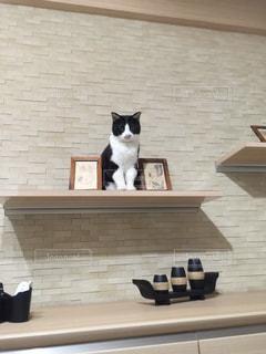 オブジェ猫ごましおの写真・画像素材[1257835]