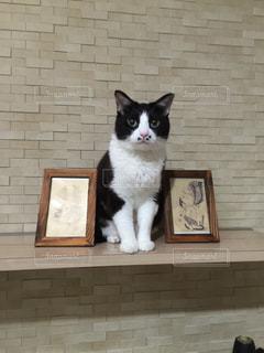 オブジェ猫ごましおの写真・画像素材[1257849]