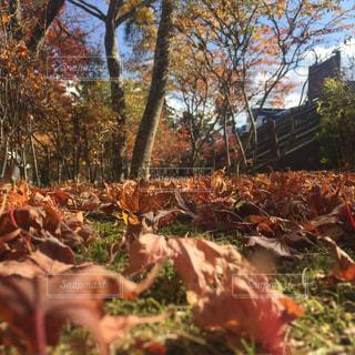 秋の散歩 - No.849953