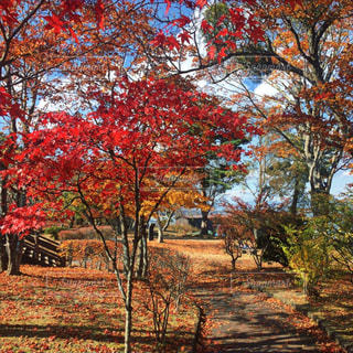 近くの木のアップの写真・画像素材[849960]