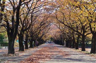 道の真ん中にツリーの写真・画像素材[849981]