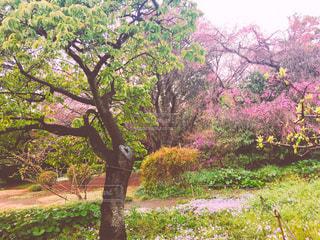 公園,東京,週末,木漏れ日,ハート,お花見,幸せ,お出かけ,隠れハート