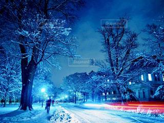 道の端に雪とツリー - No.880590
