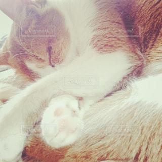 近くに眠っている猫のアップの写真・画像素材[1257411]