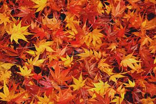 秋の写真・画像素材[1582210]