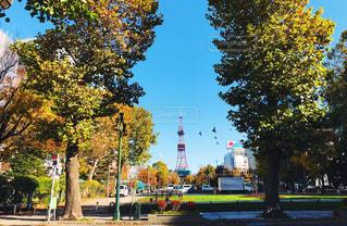 空,秋,屋外,晴天,北海道,タワー,街灯,札幌,明るい,大通り,11月,広葉樹