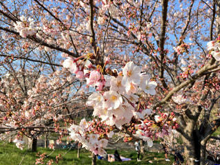春 - No.414011
