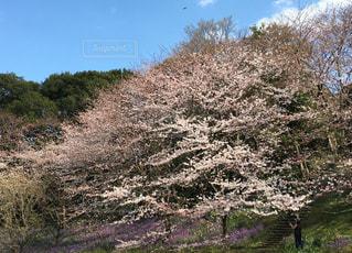 春の写真・画像素材[414025]