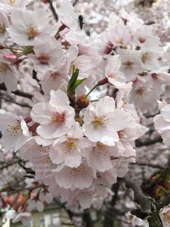 春の写真・画像素材[423949]