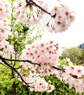 春の写真・画像素材[423951]
