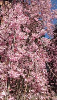 春の写真・画像素材[424483]