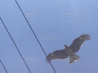 空を飛んでいる鳥の写真・画像素材[1248396]