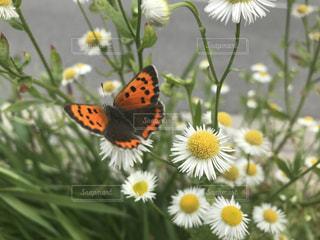 黄色,蝶々,な花