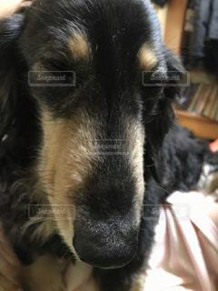 犬 - No.488104