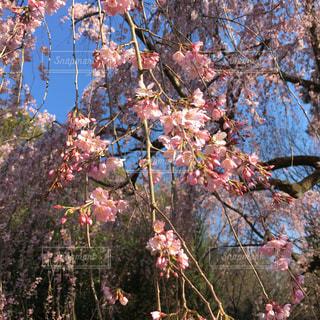 春の写真・画像素材[414750]