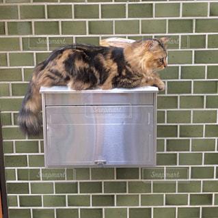 猫のお出かけの写真・画像素材[2063759]